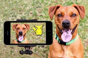 Top 2 best pet monitoring cameras to consider now - Post Thumbnail